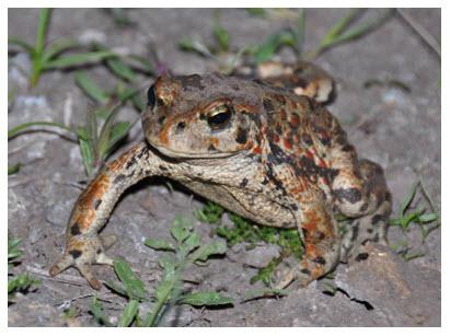 2 frogs dans l ouest online dating
