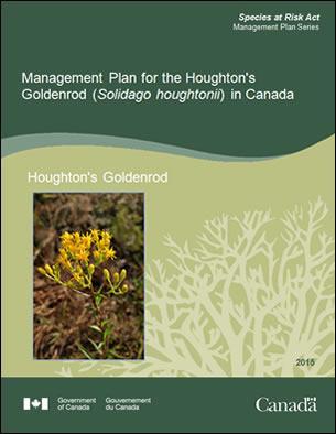 Houghton's goldenrod (Solidago houghtonii): management plan