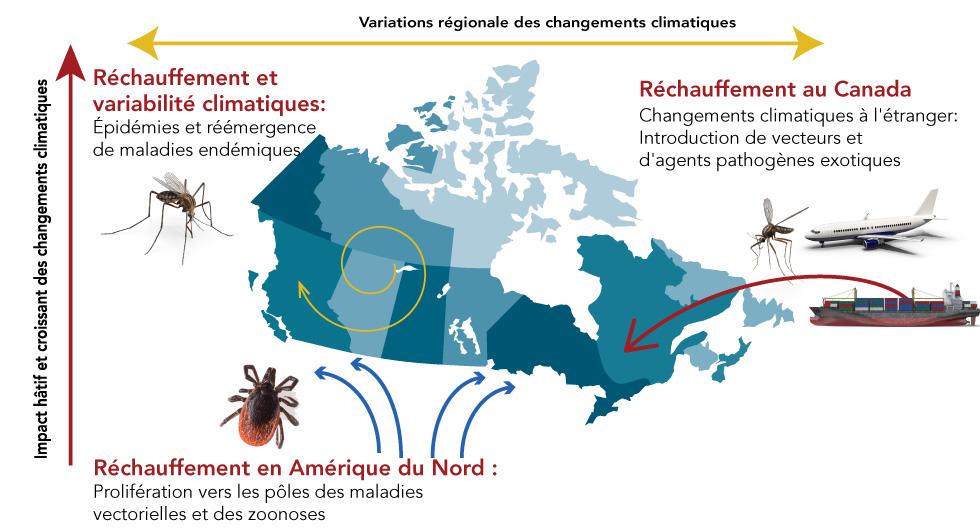 Figura 3: Un rezumat al incidenței schimbărilor climatice asupra riscului de boli infecțioase în Canada