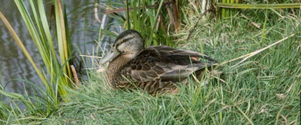 Grand Manan Island Migratory Bird Sanctuary - Canada ca