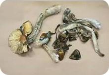 Magic Mushrooms Canada Ca