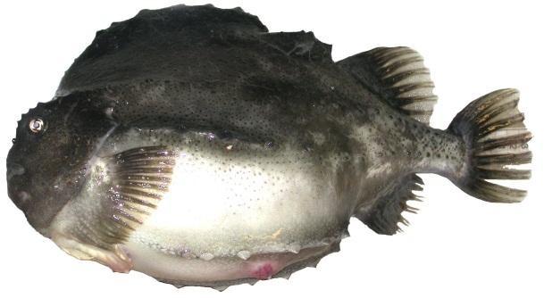 poissons d'abondance site de rencontre