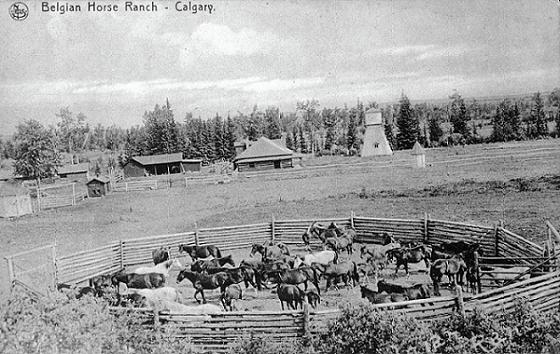 Ranch d'élevage de chevaux belges, Calgary, 1907